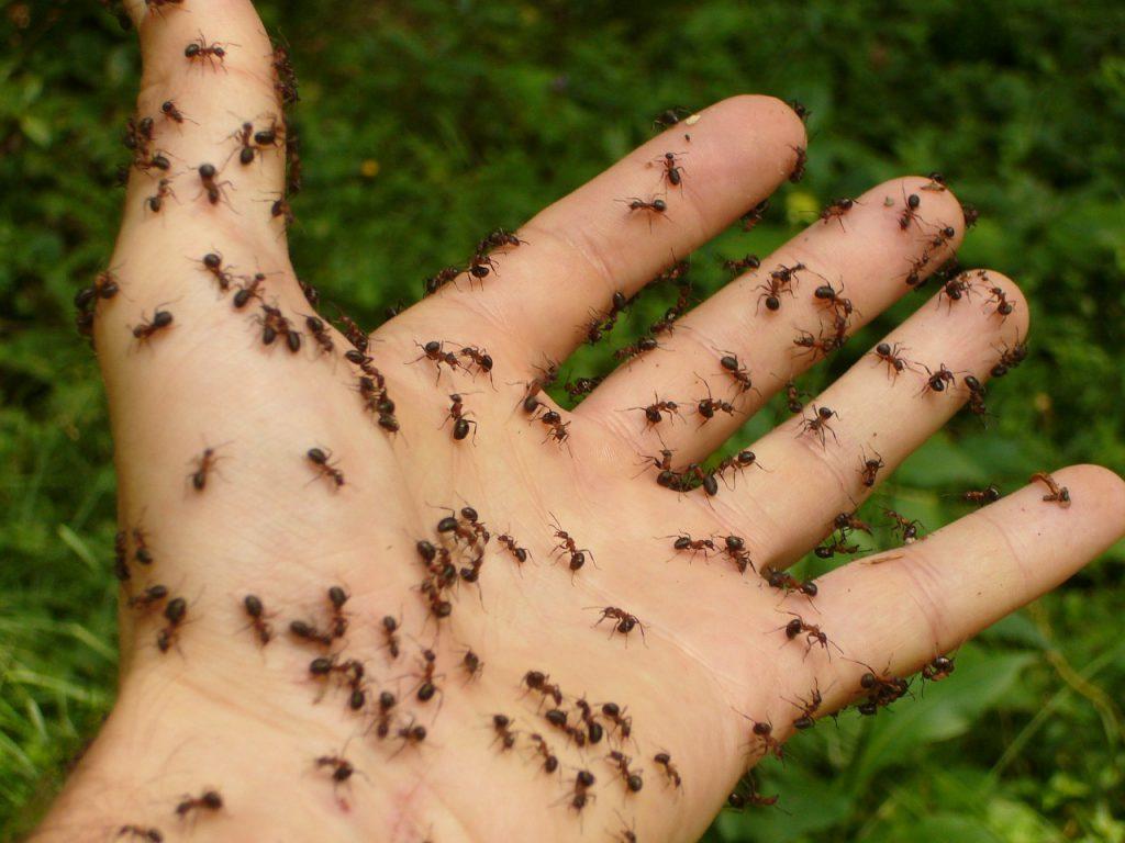 Manieren om mieren te bestrijden